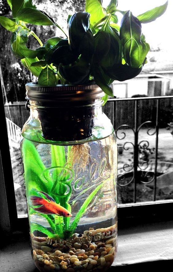 Image What You Need to Know About Cool Betta Fish Tanks