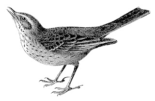 bird image illustration artwork drawing digital clipart