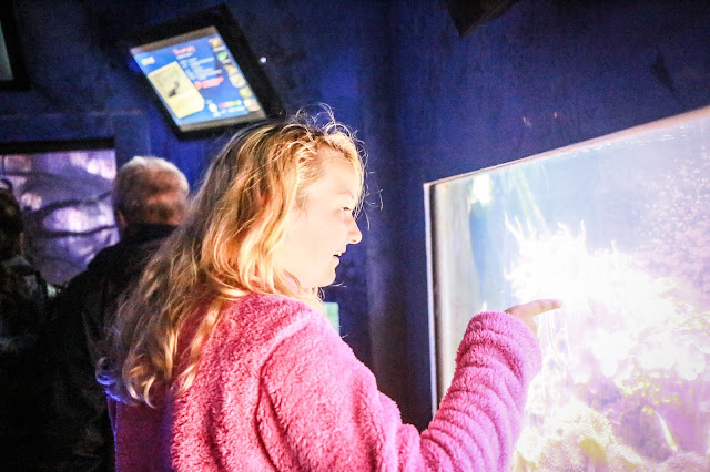 Scarborough sea life centre, mandy charlton, travel blogger, photographer