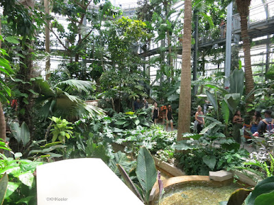 tropical room, Conservatory United States Botanic Garden