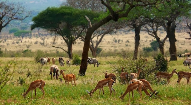 tour-of-kenya-03