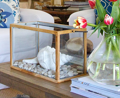 Glass Box for Shells