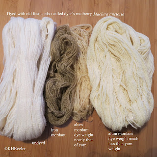 yarns dyed with old fustic, Maclura tinctoria