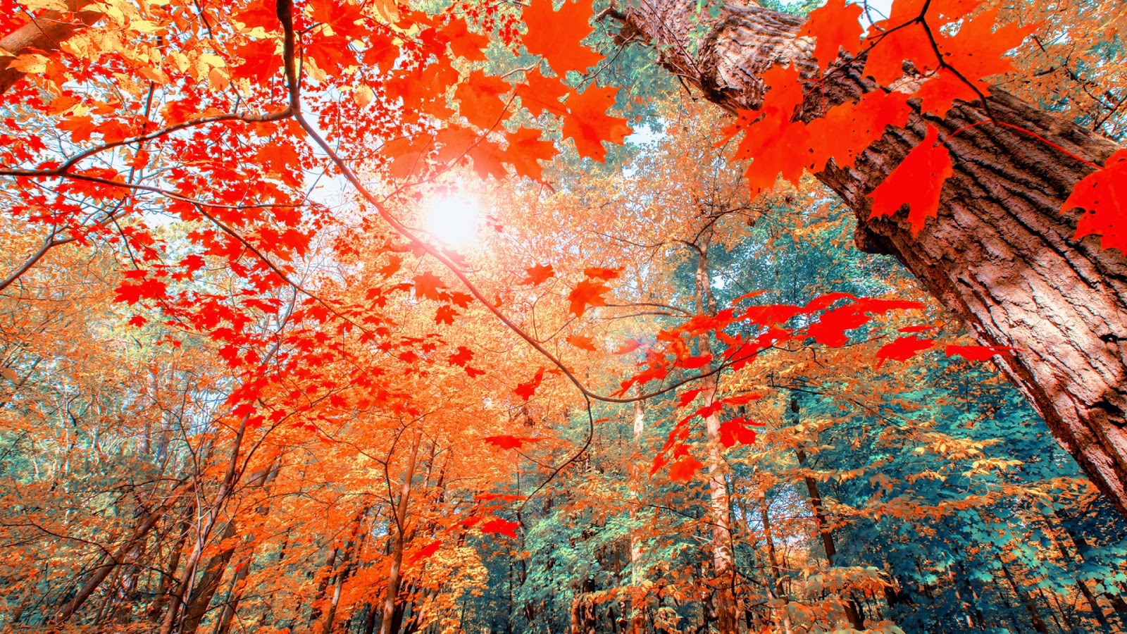 Autumn Hd Wallpaper 1080p 6