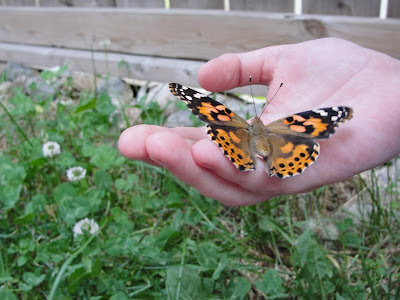 painted lady butterfly on child's hand
