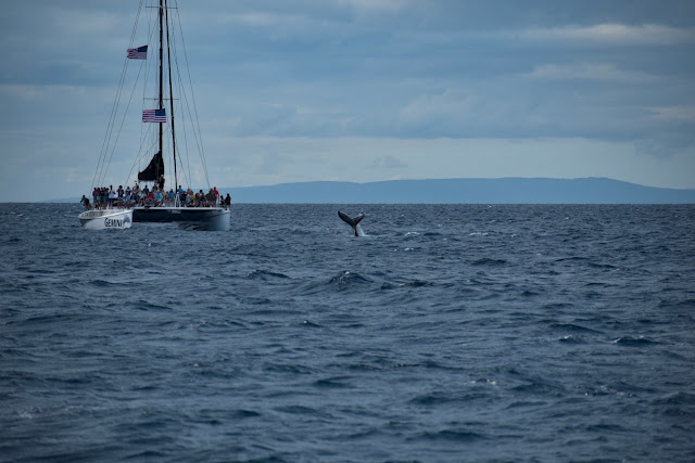 Hawaii, Whale Watching