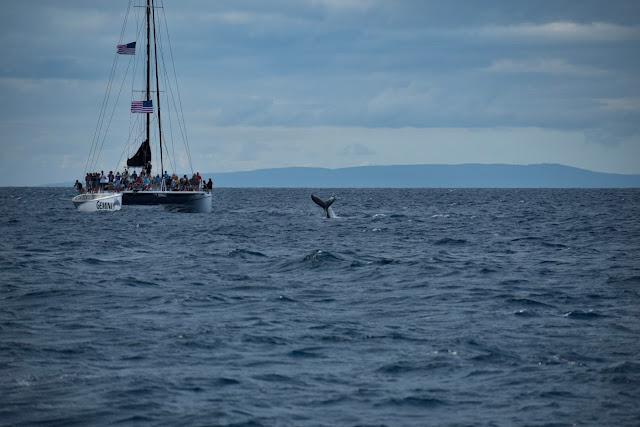 Hawaii, Whale Watching