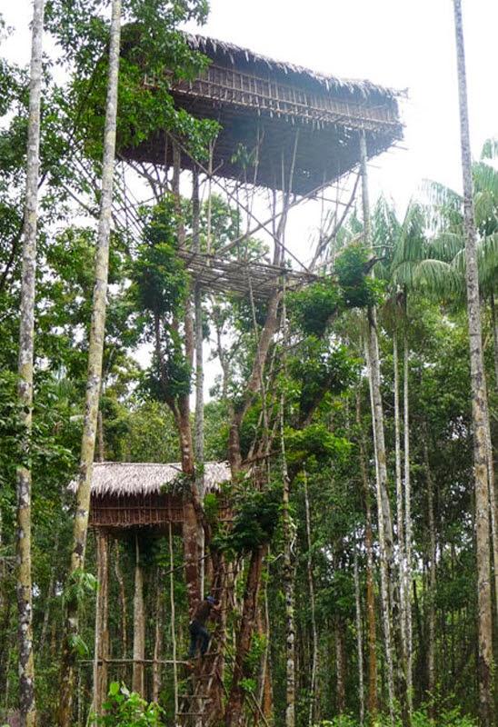 una persona sube las escalas de madera hacia la casa del árbol