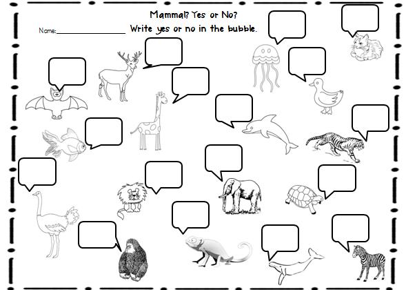 Sample's Superstars: Animal Classifications Unit