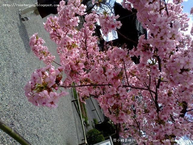 2013年$4100 日本關西東海7天遊