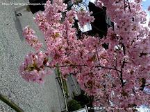 $4100  7天日本之旅2013 目錄