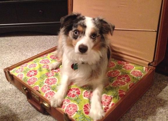 Gypsy Blue Eyes Diy Suitcase Dog Bed