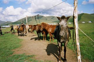 mongolianhevonen, ratsastusmatka