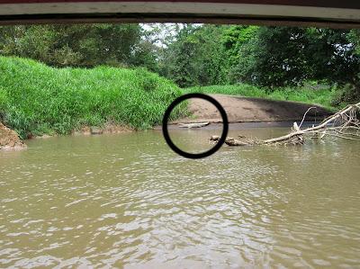 Cocodrilo rio Tortuguero, Costa Rica, vuelta al mundo, round the world, La vuelta al mundo de Asun y Ricardo, mundoporlibre.com