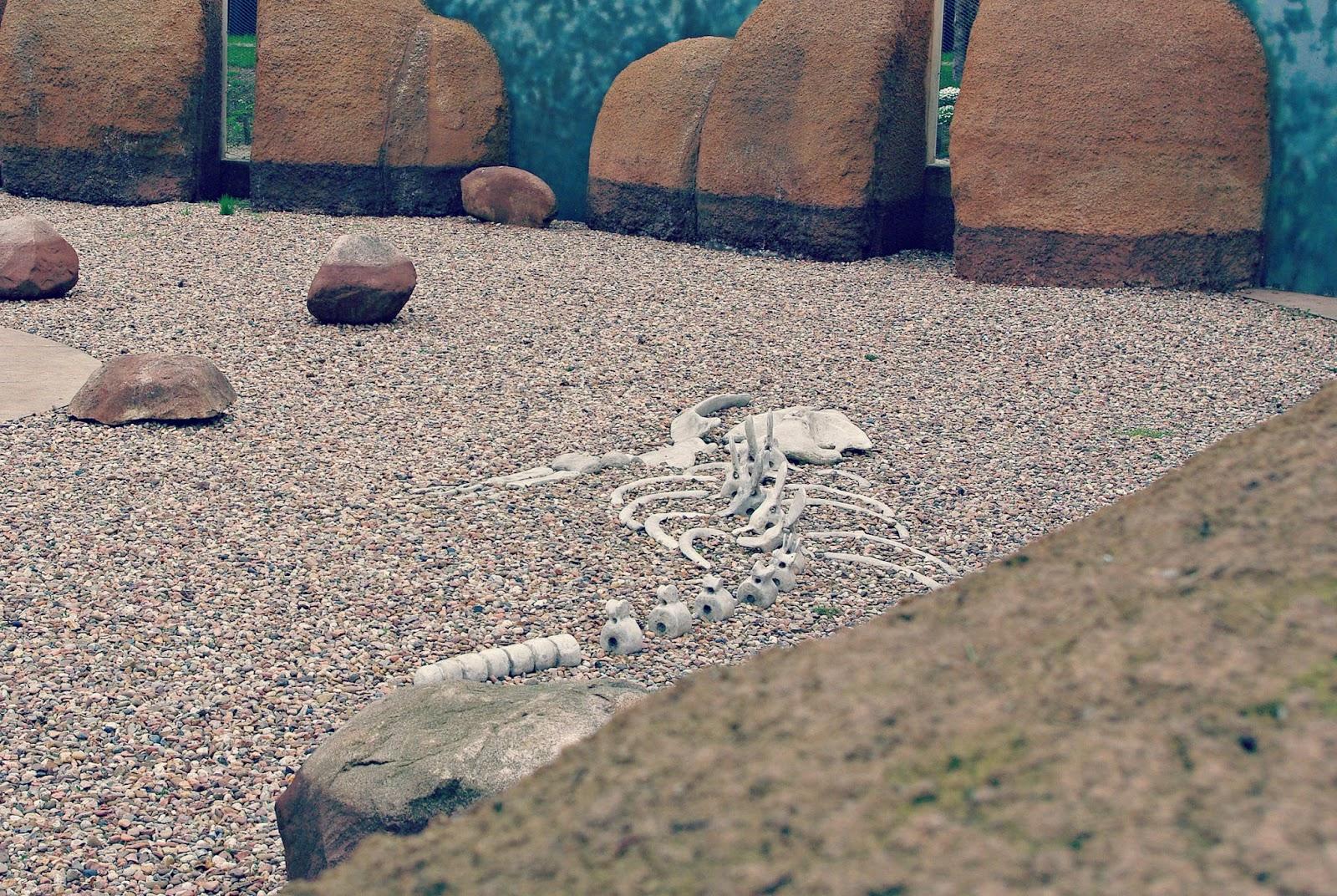 Wybrzeże Szkieletów