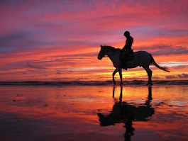 Dreamlike horseback riding on Katwijk Beach