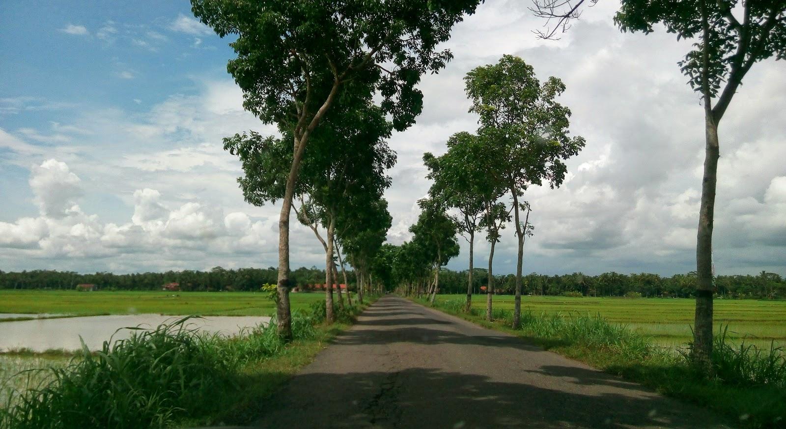 jalanan Indah di jawa tengah, jalan raya di pesawahan, jalan raya di perkebunan