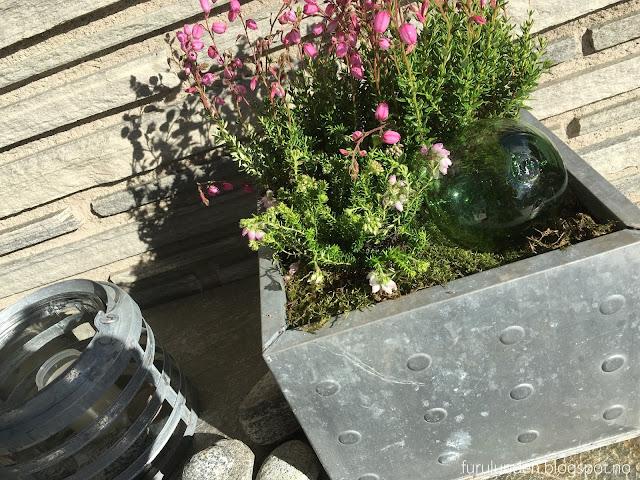 Inspirasjon til høstplanter i krukker - del 5. Stilleben på overbygget veranda i Furulunden
