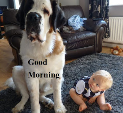 Good morning dog very funny photos with cute baby