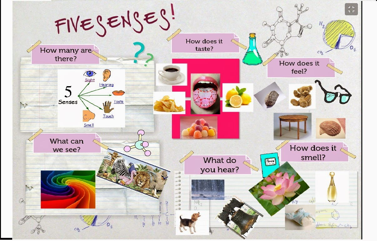 My Aicle Clil Course My Senses Didactic Unit For 1st Grade