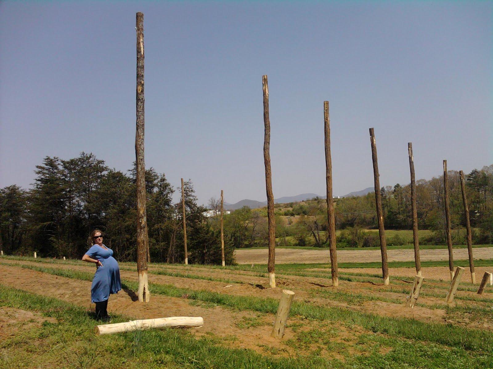 Hopyard Business Planning & Hop Trellis Design
