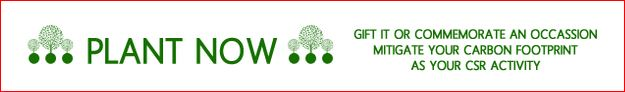 http://www.greening.in/2013/05/payment-by-paypal.html