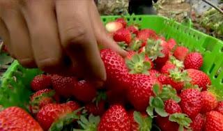 Produtora de frutas orgânicas