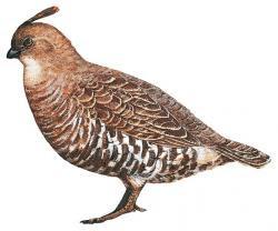 endemic birds Mexico