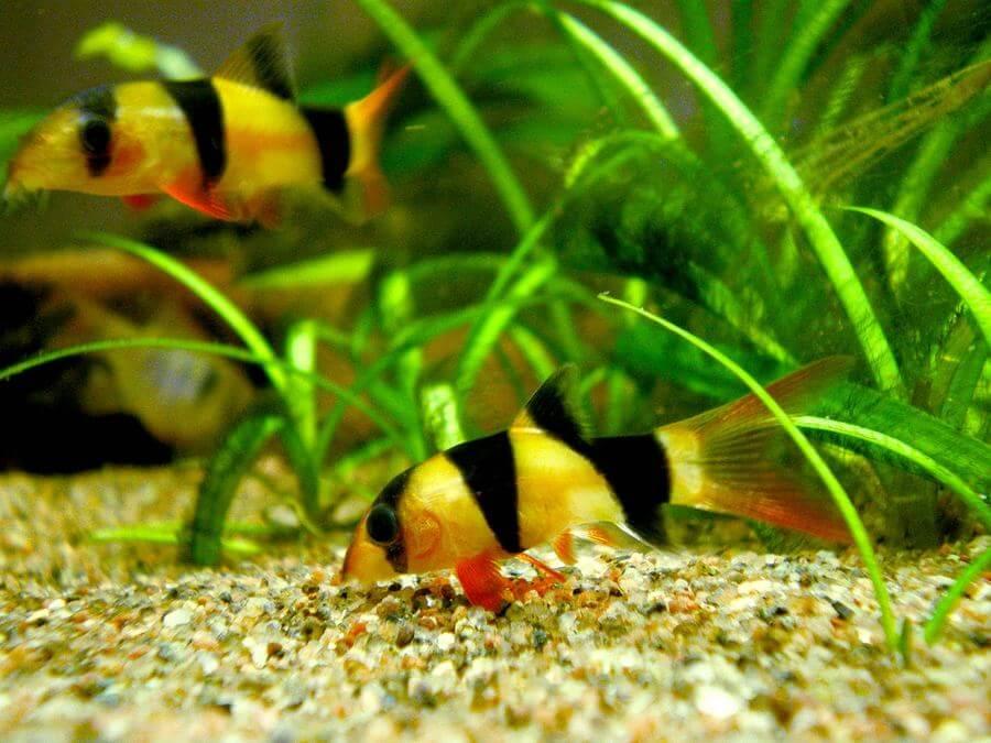 20 Ikan Hias Cantik Yang Selalu Dicari Dan Trend Pada Tahun 2018