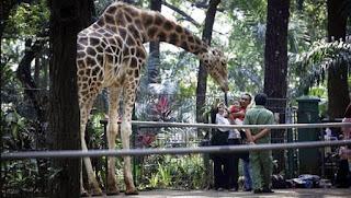 Wisata Edukasi ke Kebun Binatang Ragunan Jakarta