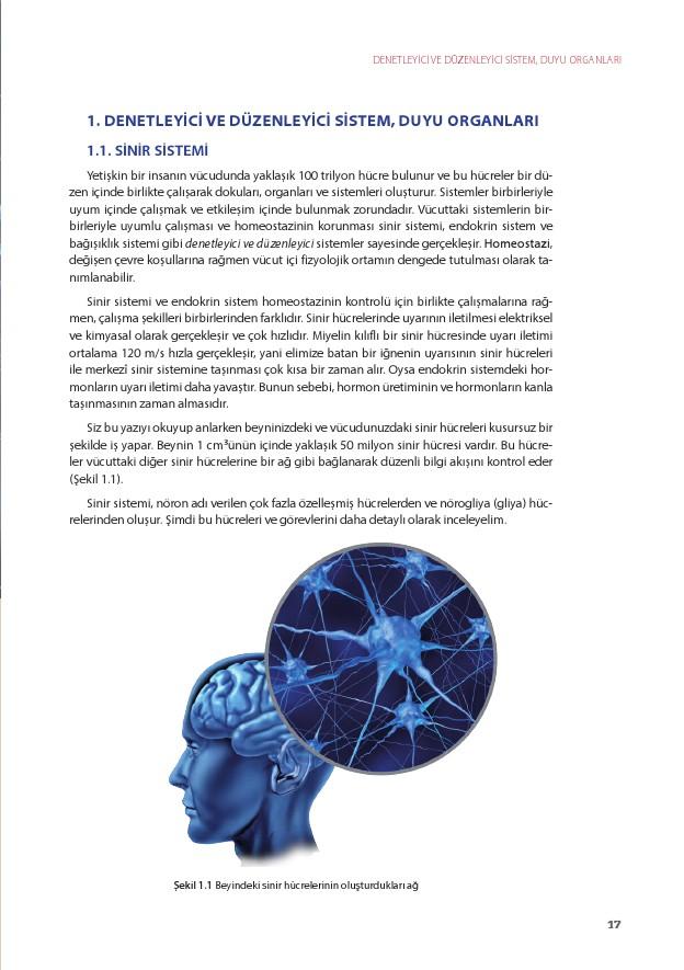11. Sınıf Biyoloji Ders Kitabı Cevapları Köke Yayınları Sayfa 17
