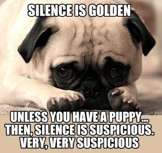 Dog Humor : Silence is golden
