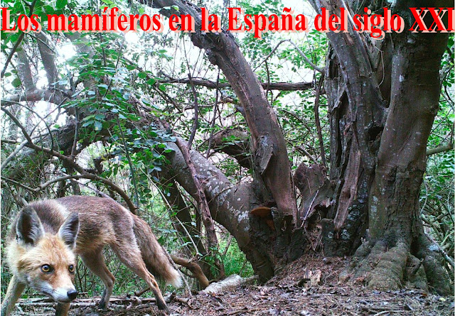 Los mamíferos en la España del siglo XXI