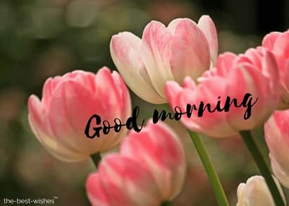 good morning wishes with flower