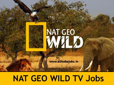 Nat Geo Wild TV Jobs 2017-2018 | Nat Geo Wild TV Channel