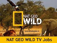Nat Geo Wild TV Jobs