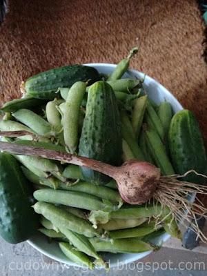 Groszek cukrowy, ogórki, czosnek z własnego warzywnika
