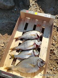 poisson pas encore grillé