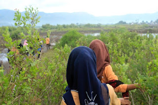 Trekking mangrove di Bagek Kembar