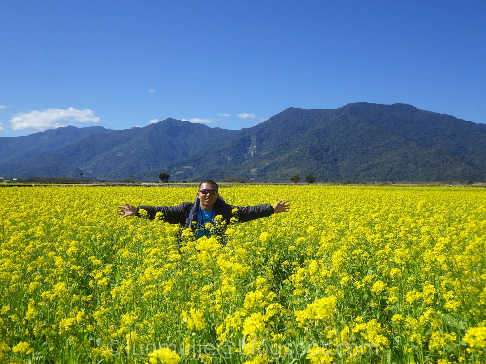 Taitung East Rift Valley Rapeseed/Canola Flower Sea