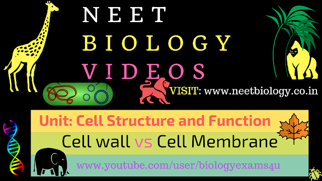 NEET Biology Video - Cell wall and Cell membrane