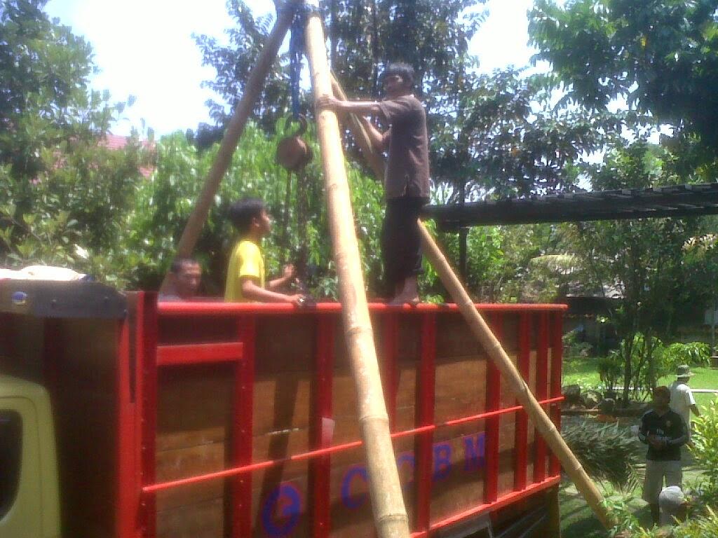 Pohon_korma_pengiriman_ke_ciawi_bogor