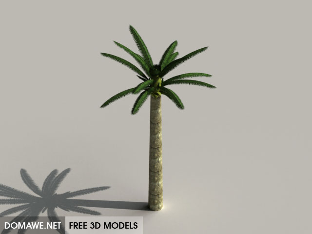 DOMAWE net: Palm Tree 3D Model Free Download - 3
