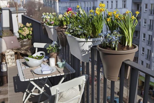 10 Φυτά που αντέχουν τη ζέστη για το Καλοκαιρινό Μπαλκόνι σου!