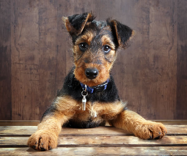 Area of Cute Puppy Pictures