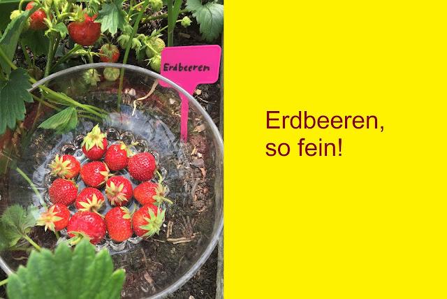 Erdbeeren auf dem Genussbalkon