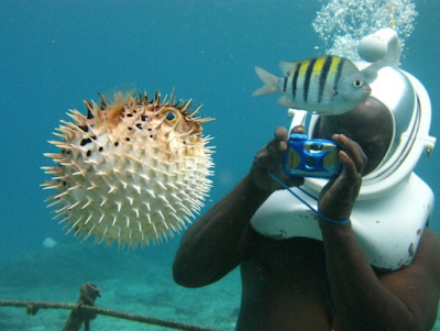 sea trek puffer fish
