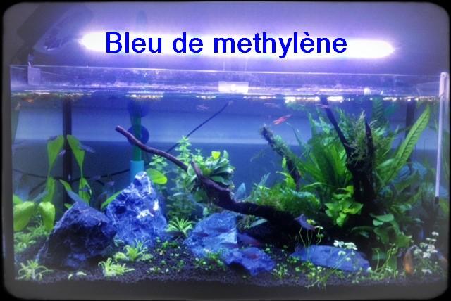 poissons néons aquarium