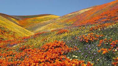 Paisajes de flores silvestres. Reserva Antelope Valley California Poppy