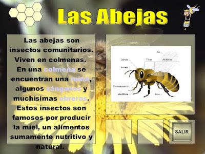 caracteristicas de las abejas